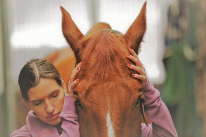 Behandlung Pferd equi-librium - energetische Osteopathie für Pferde